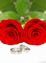 Wedding rings and red roses beautiful Stock Photography