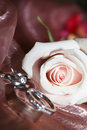 Wedding rings in a rose Royalty Free Stock Images