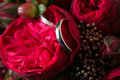 Wedding rings and roses bouquet red Stock Images