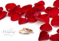 Wedding rings and roses petals Royalty Free Stock Image