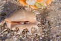 Wedding rings in a shell on the beach Royalty Free Stock Photo