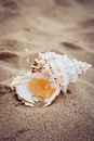Wedding rings in a shell on sea coast Royalty Free Stock Photo