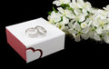Wedding rings white gold on the box with flowers isolated on black Royalty Free Stock Photos