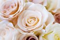 Wedding roses bridal bouquet of beautiful for a Royalty Free Stock Photography