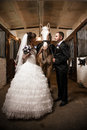 Wedding in stable newly married couple posing with horse Royalty Free Stock Photos