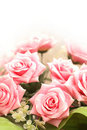 Wedding and Valentine concept with many pink roses Royalty Free Stock Photography