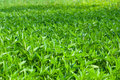 Weed grass field Royalty Free Stock Photo
