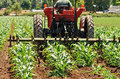 Weed row tractor pulling a spring harrow to control weeds in a new growth corn field Royalty Free Stock Photos