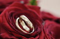 Weeding rings presented in a red rose close up Stock Image