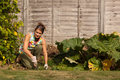 Weeding the Vegetable Patch Royalty Free Stock Images