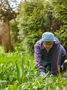 Weeding woman in the garden and she use protective gloves Stock Image
