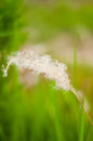 Weeds brown in the field Royalty Free Stock Photography