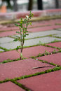 Weeds growing Royalty Free Stock Photo