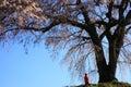 Weeping cherry tree and jizo gunma japan Stock Photos