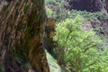 Weeping Rock Trail A Royalty Free Stock Photo
