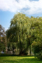 Weeping Willow On The Banks Of...