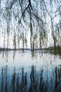 Weeping willow on the coast of west lake in hangzhou silhouettes walking around famous park city center china Royalty Free Stock Photo