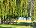 Weeping willow over a small bridge Royalty Free Stock Images