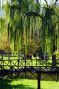 Weeping willow in the park scenery with and lake with fence Royalty Free Stock Photos