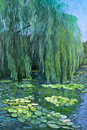 Weeping willow tree and water lilies a pond reflects a Royalty Free Stock Photos