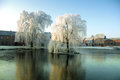 Weeping willows Royalty Free Stock Photo