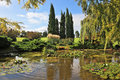 Weeping willows and cypresses in a pond Stock Image