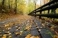 Weg in het bos in de herfst met oranje bladeren Royalty-vrije Stock Foto's