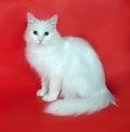 Weiße katze die auf rot sitzt Stockbild