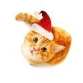 Weihnachten cat looking up auf weißem hintergrund Stockfotografie