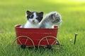 Weinig kitten outdoors in natuurlijk licht Stock Afbeelding