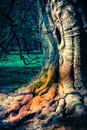 Weird tree strong magical and hollow Stock Images