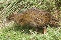 Weka Stock Photos