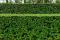 A well landscaped and manicured hedge of bushes with mulch grass in step pattern Royalty Free Stock Photography