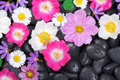 Wellness, hot stones and flower background Royalty Free Stock Photo