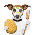 Wellness spa wash sponge dog Royalty Free Stock Photo