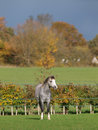 Welsh Pony In Beautiful Light Royalty Free Stock Photos