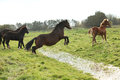 Welsh pony mare jumping over the water on green pasturage Royalty Free Stock Photos