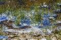 Wenatchee River Diamonds Sparkles Winter Snow Washington Royalty Free Stock Photo