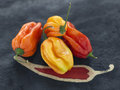 West Indian peppers Stock Photo