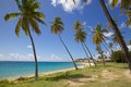 West indies caribbean antigua palm trees and beach view of Royalty Free Stock Image