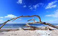 Western beach overturned tree on the of the peninsula fischland darss zingst baltic sea mecklenburg pomerania germany Royalty Free Stock Photography