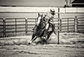 Western horse pole bender in gritty sepia and rider competing bending and barrel racing competition look with toning Royalty Free Stock Photos