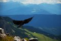 Western jackdaw Alps Royalty Free Stock Photo