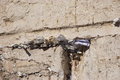 Western wall jerusalem israel a closeup of the wailing in the old city of in the cracks between the bricks there are numerous Royalty Free Stock Photos