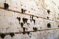 Western wall stone and vegetation Royalty Free Stock Images