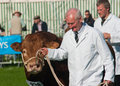 Westmorland cattle show Stock Photo