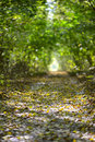Wet autumn forest road Stock Photography