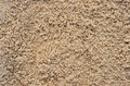 Wet beach sand close up view of grain Stock Image