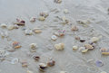 Wet beach sand with seashells background Royalty Free Stock Photos