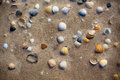 Wet beach sand with seashells background horizontal shot Stock Image